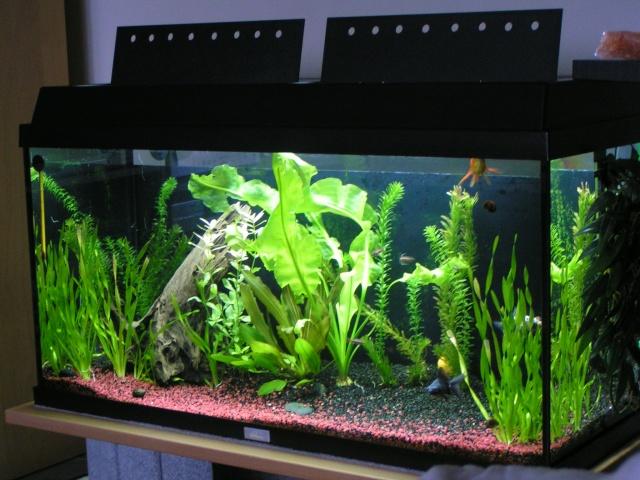 achat neon aquarium aqua goldfish aquarium juwel rekord 110 vendu