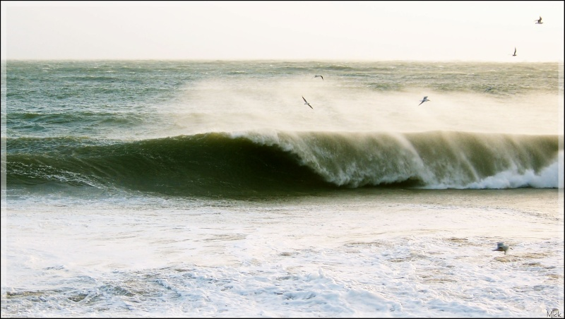 photo de surf 2520