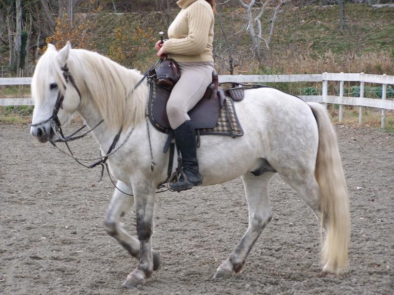 770c1dc82b6 Aux propriétaires de chevaux camargues