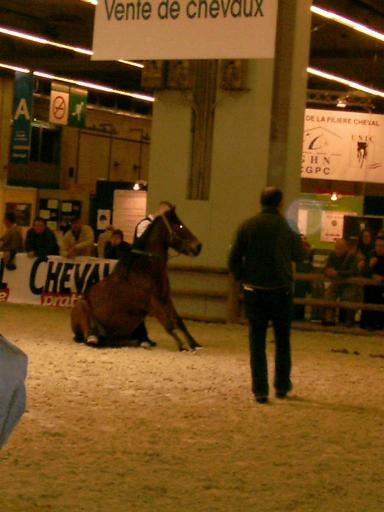 Le salon du cheval de paris for Salon du cheval a paris