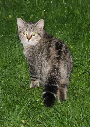 chats errants castellar