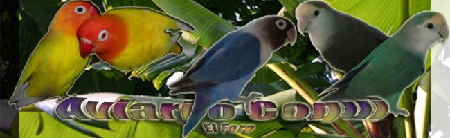aviariocoqui