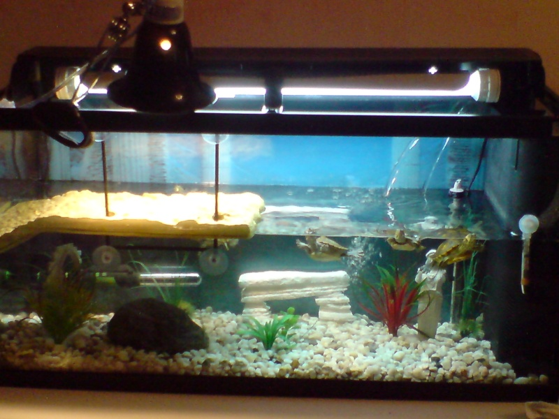 lampe chauffante aquarium
