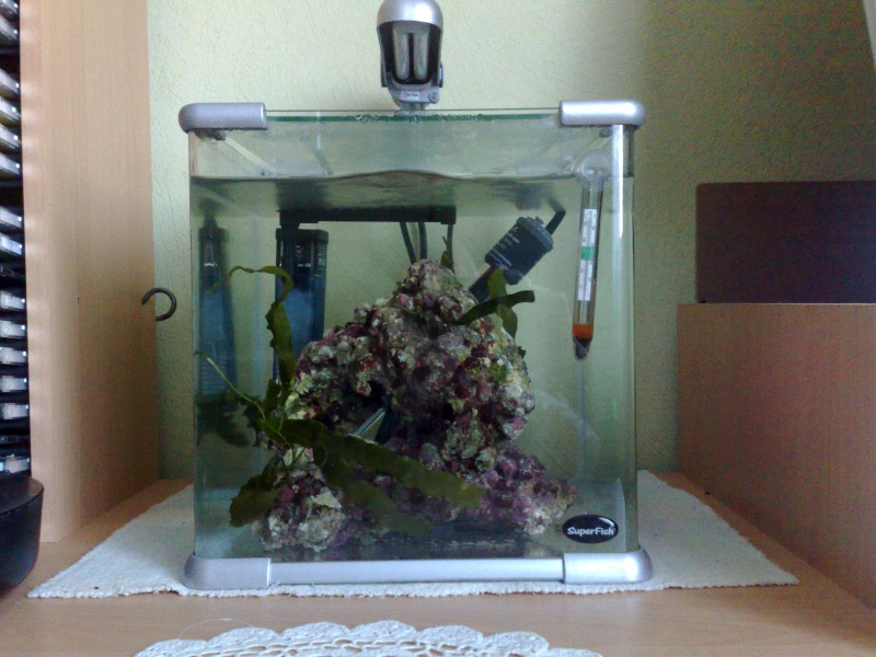 Nano eau de mer for Aquarium eau de mer