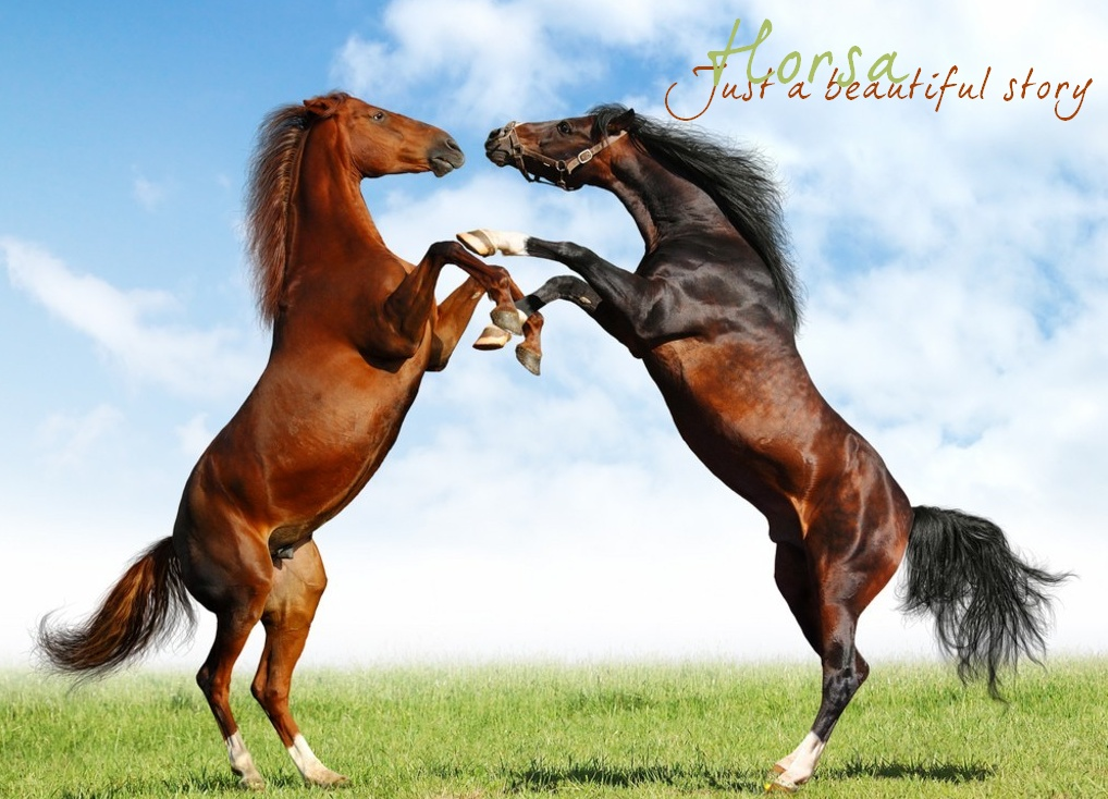 Horsa, elevage virtuel de chevaux