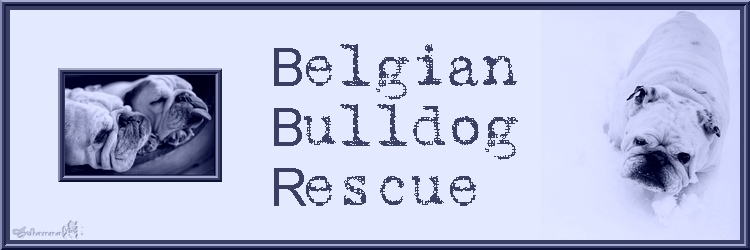 Belgian Bulldog Rescue