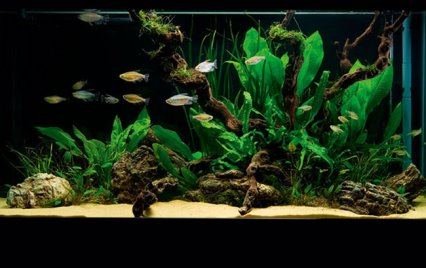 How to set up a simple - but stunning - planted tank