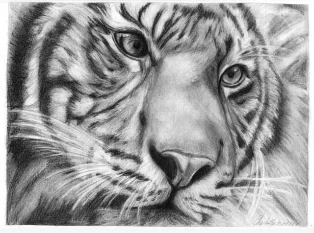 Pin dessin tigre a colorier on pinterest - Tete de tigre dessin facile ...