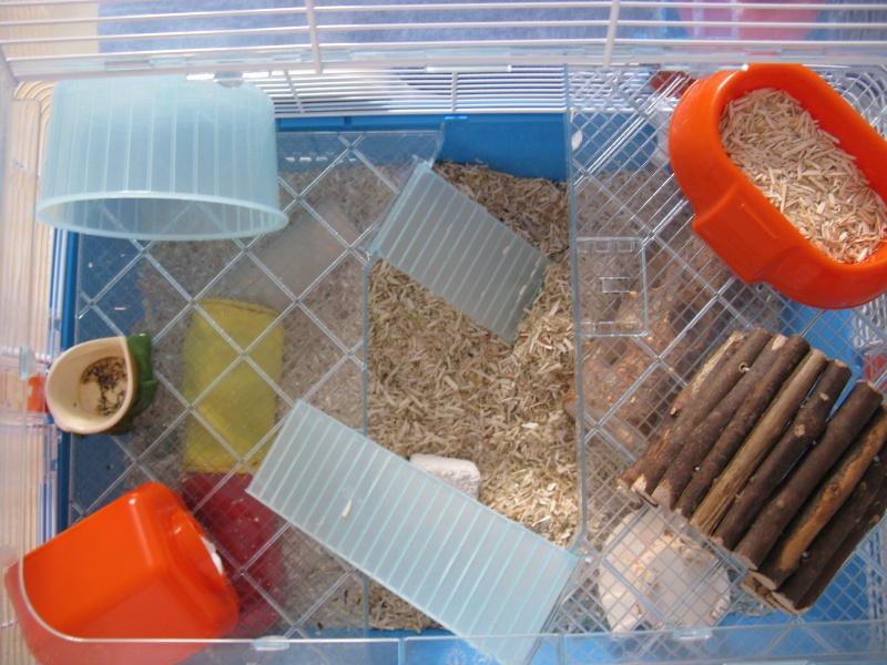 duna fun la nouvelle cage de mes souris meltriskell. Black Bedroom Furniture Sets. Home Design Ideas