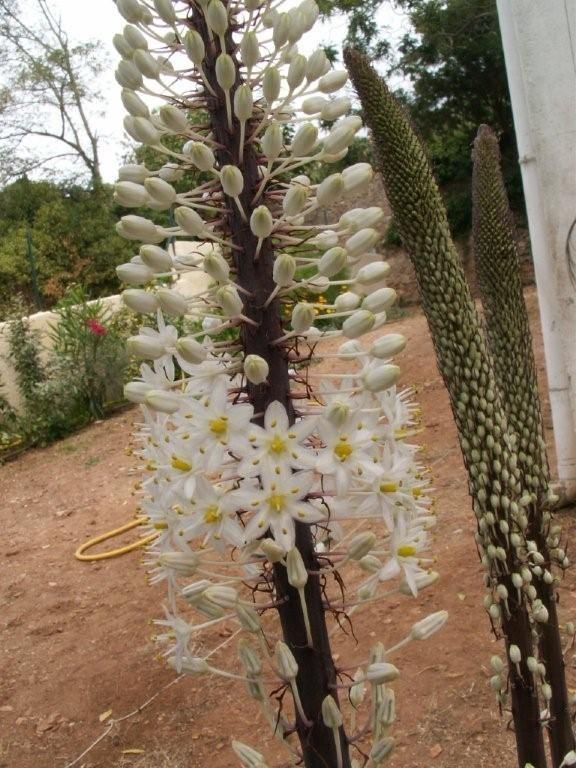 Hauteur m longue tige verte grande fleur blanche sans feuilles urgin - Fleur blanche longue tige ...