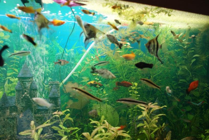 Bac malade for Quoi mettre aquarium poisson rouge