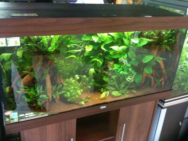 déco aquarium maxi zoo