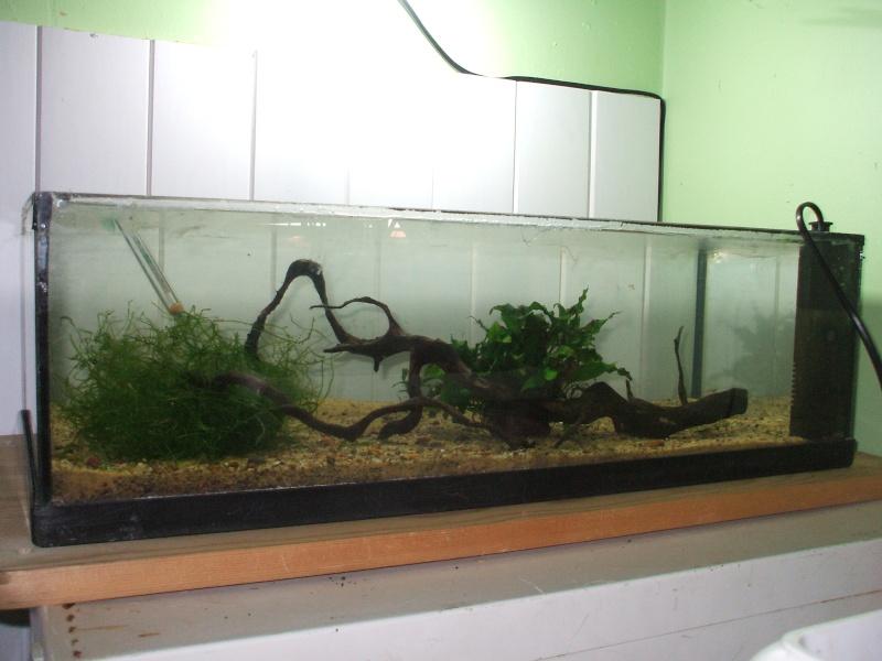Projet bac ouvert for Aquarium ouvert
