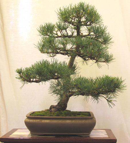 pine_010.jpg