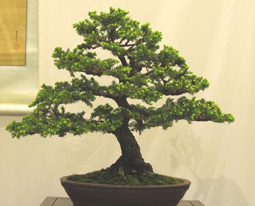 spruce10.jpg