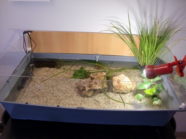 Le chauffante pour tortue 28 images des nids de for Aquarium tortue aquatique