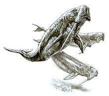 Cryptozoologie forum mastodonte d'Ataka odobenocetopsidae nouveau cétacé baleine à défense