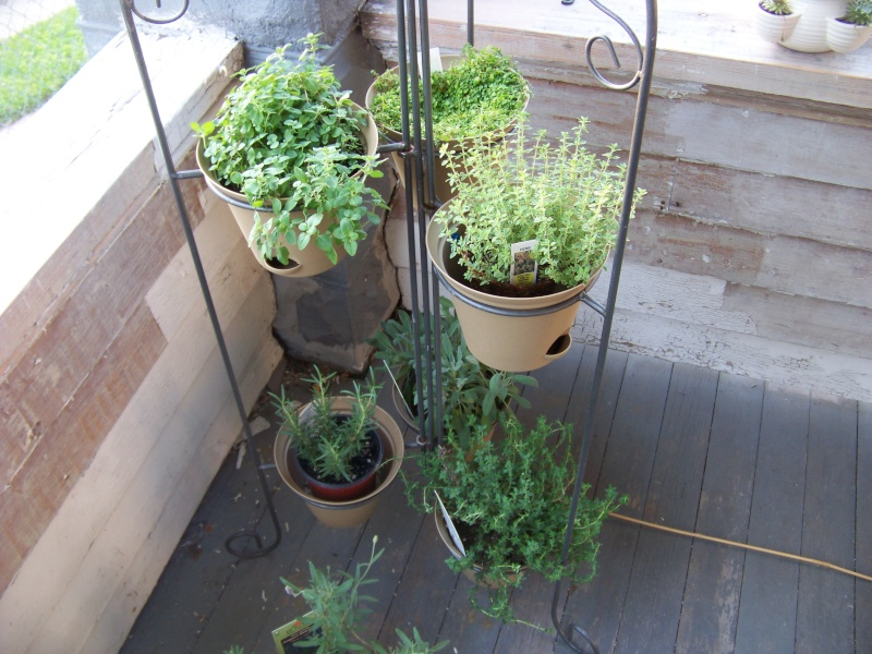 Front Porch Herb Garden Oregano Lemon Thyme Corsican Mint Sage Summer Rosemary Still Need To Finish Potting Some Of Those