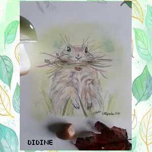 didine49.jpg