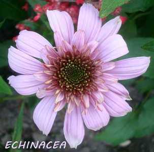 echina10.jpg
